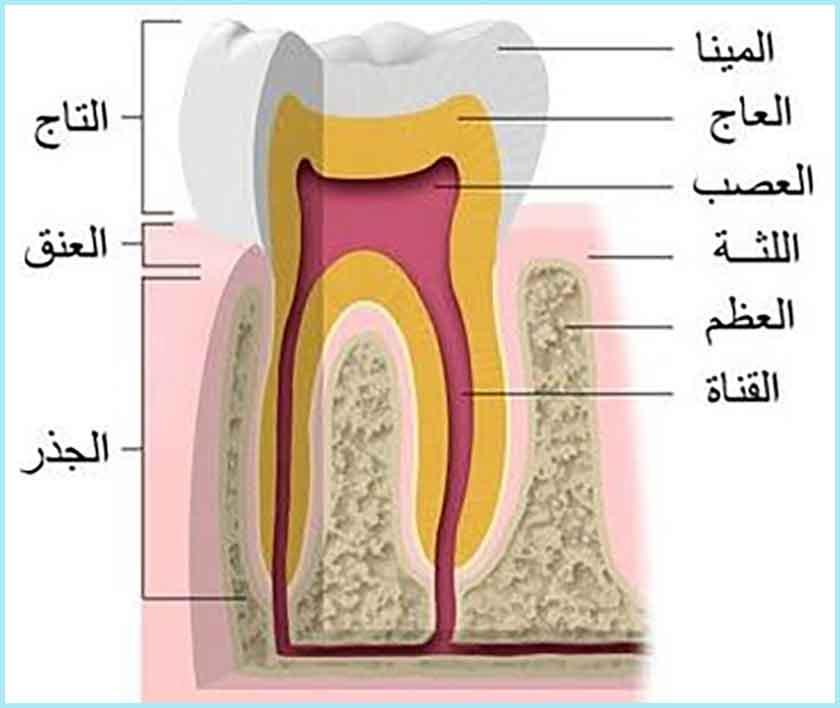 عيادة جراحة الأسنان للدكتور دحمان محمد بمسعد - الجلفة