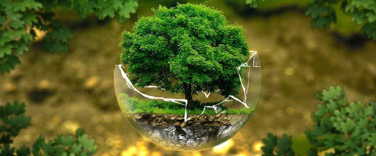 جمعيات البيئة
